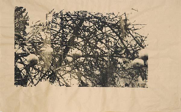 Яблоки II. 70×100 см