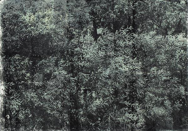 Куст I. 70×90 см