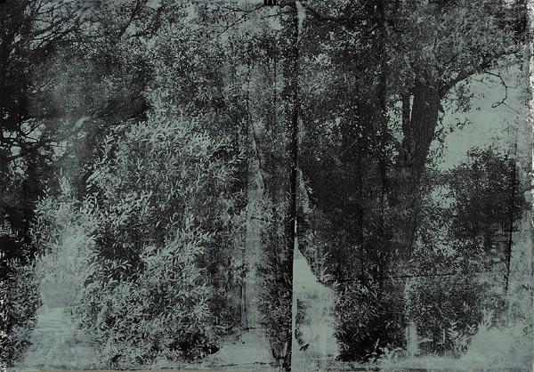 Куст II. 70×90 см
