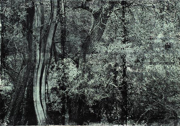 Куст IX. 70×90 см
