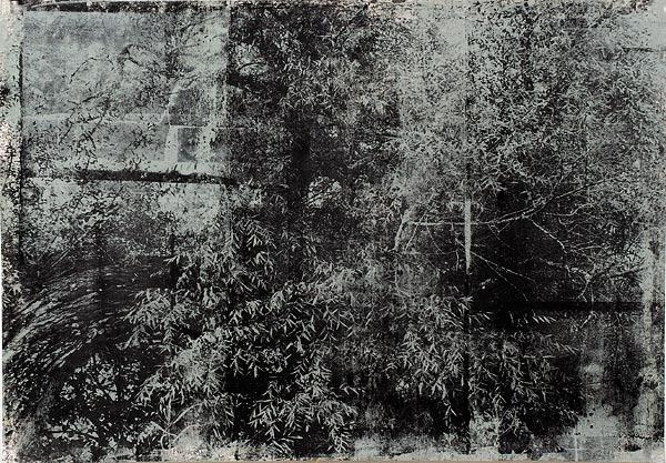 Куст X. 70×90 см
