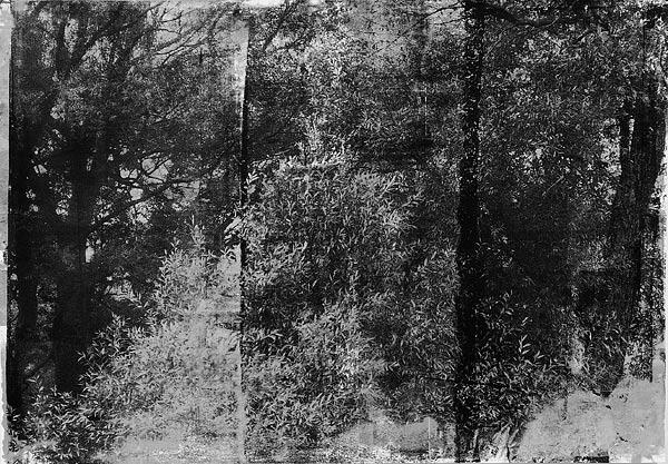 Куст XI. 70×90 см